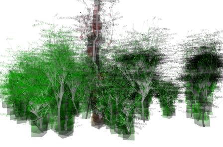 sesblog-erdő