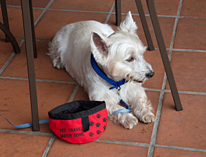 20070318_pet_travel_water_bowl_1.jpg