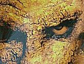 20070406_stalker_dvd_09042007082_s.jpg