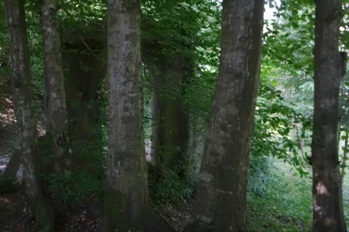 Képriport